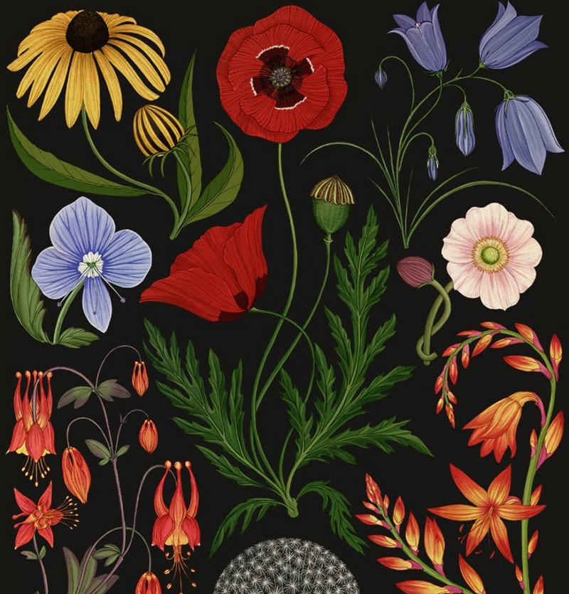Botanicum. Viaje a través de la botánica con ilustraciones de Katie Scott, Vivero Tierranegra, Medellín, Colombia