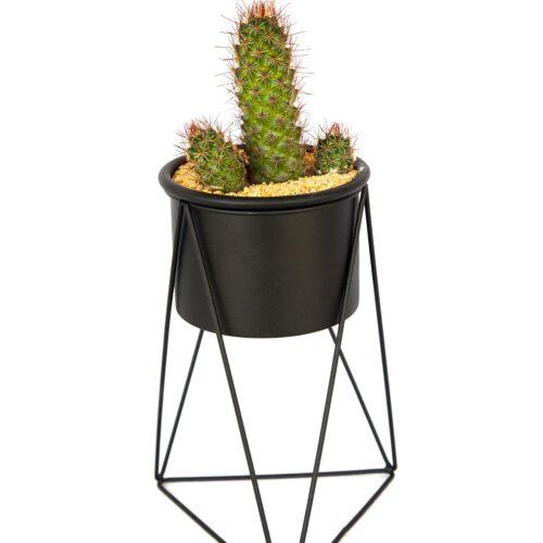 Combo cactus y matera líneas