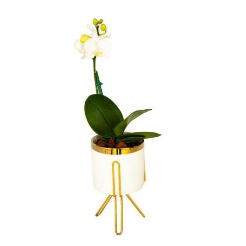 Combo Orquídea y Matero cerámica